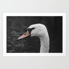 Swan Portrait 4 Art Print