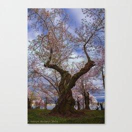 """Cherry Tree"" - DC Cherry Blossom Festival Canvas Print"
