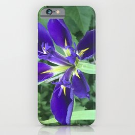 Siberian Iris purple blue and green in the garden  iPhone Case