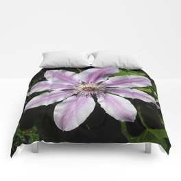 Clematis Nellie Moser Comforters