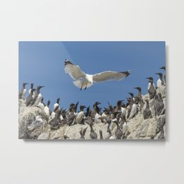Seagull hovering over birds Metal Print