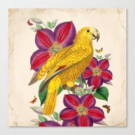 Oh My Parrot V Canvas Print