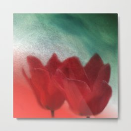 two red tulips -100- Metal Print