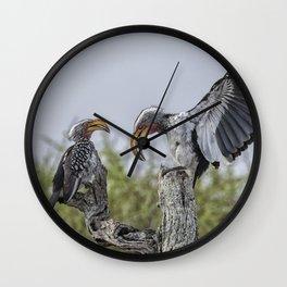 Southern Yellow-billed Hornbills Mating Display, No. 1 Wall Clock