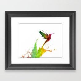 Humming Bird Colors Framed Art Print