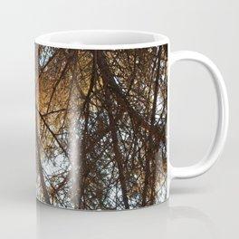 Sunset Through Douglas Fir Coffee Mug