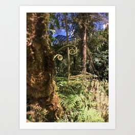 The Ferns of the Cloud Forest Art Print