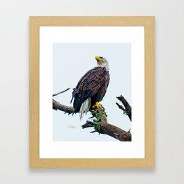 Bemidji Eagle I Framed Art Print
