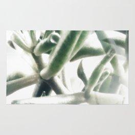 Jade - money plant - succulent in bright light Rug