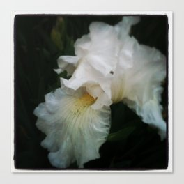Ghost Flower Canvas Print
