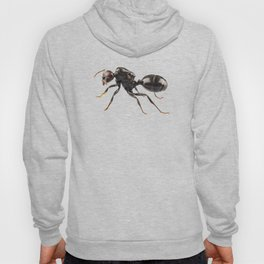 Black garden ant species Lasius niger Hoody