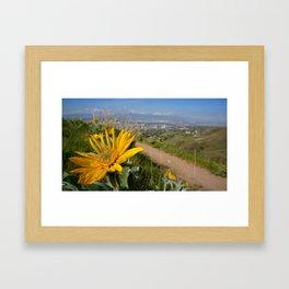 Sun Flower Looking On Framed Art Print