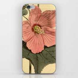 Vintage Illustration of a Hibiscus Flower (1806) iPhone Skin