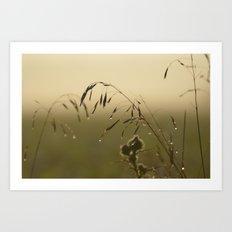 Morning Dew Bending Delicate Grass Art Print