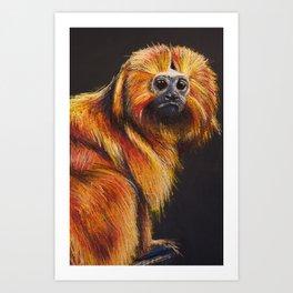 Golden Lion Tamarin Art Print