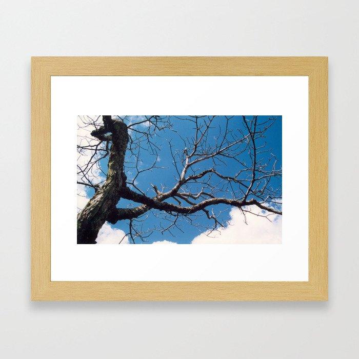 Stretching Toward Spring Framed Art Print