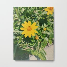 Dainty Yellow Flower Metal Print