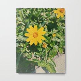 Dainty Yellow Flower Metal Print