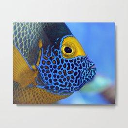 Blue-faced Angelfish Metal Print