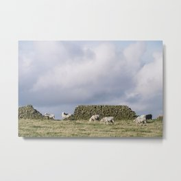 Sheep beside a drystone wall at sunset. Derbyshire, UK. Metal Print
