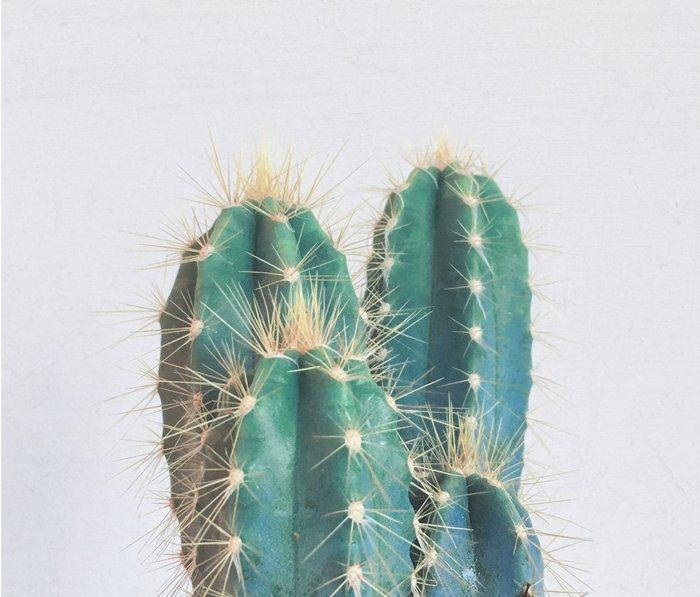 Cactus II Metal Travel Mug