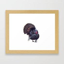 WIld Tom Turkey isolated on white background Framed Art Print