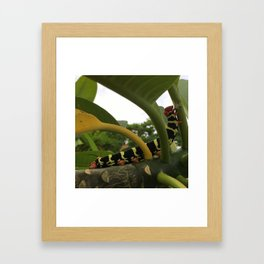 Frangipani Caterpillar II Framed Art Print