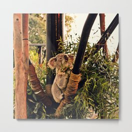 Hungry Koala Metal Print