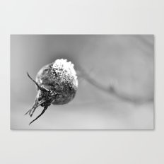 Frost on rose hip Canvas Print