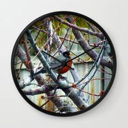 Red Robin - Chillin - Jeronimo Rubio Photography 2016 Wall Clock
