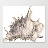 shell Canvas Prints featuring Shell by RasaOm