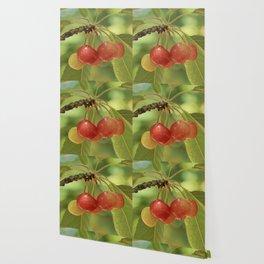 CHERRIES Wallpaper