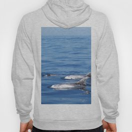 Beautiful risso´s dolphins in Tenerife Hoody