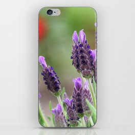 Lavender in a dialog with a rose iPhone Skin