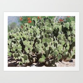 Cactus Wall #3, Opuntia Microdasys Prickly Pear Cactus, aka Bunny Ears, Polka Dot, white red green Art Print