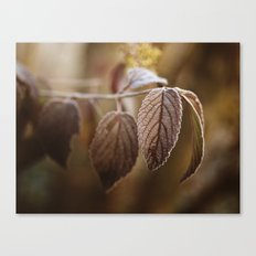 November Frost Canvas Print