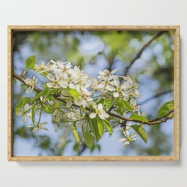 white pearblossom in the springtime Serving Tray