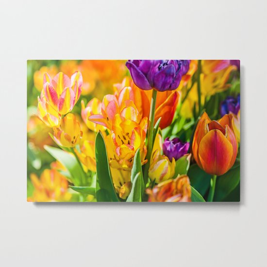Tulips Enchanting 01 Metal Print