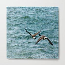 Pair of Canadian Geese Flying Away Metal Print