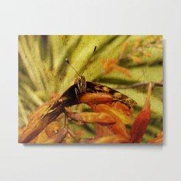 Butterfly on Crosmosia Metal Print