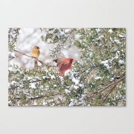 Red Cardinal Rising Canvas Print