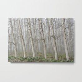 Foggy Poplars Metal Print
