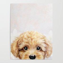 Toy poodle Dog illustration original painting print Poster