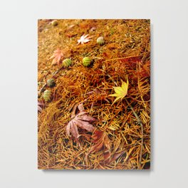 Colorful Japanese Maple Leaves and Acorns on the Ground In Fall Photography Metal Print