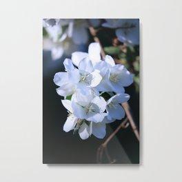 Hawthorn Bouquet Metal Print