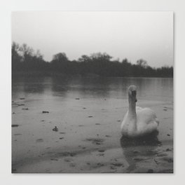 Witchcraft IV - Swan Canvas Print