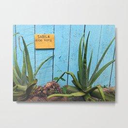 Costa Rican Aloe Garden Metal Print