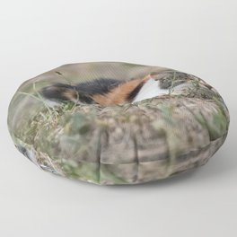 Multicolor cat is playing hide and seek Floor Pillow