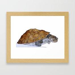Happy Little Turtle Framed Art Print