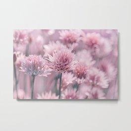 Allium pink 0146 Metal Print